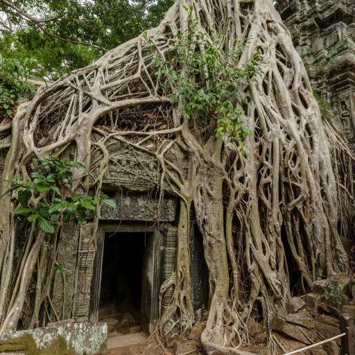 image from Ta Prohm